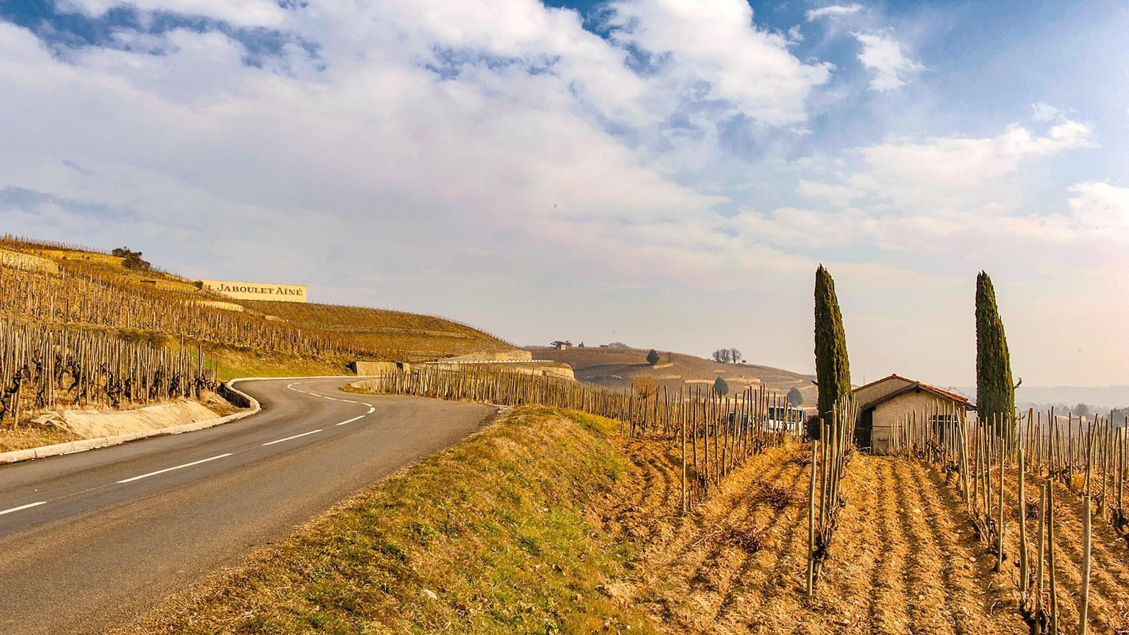 Auf dem Hermitage-Hügel von Tain-l'Hermitage. Foto: Hilke Maunder