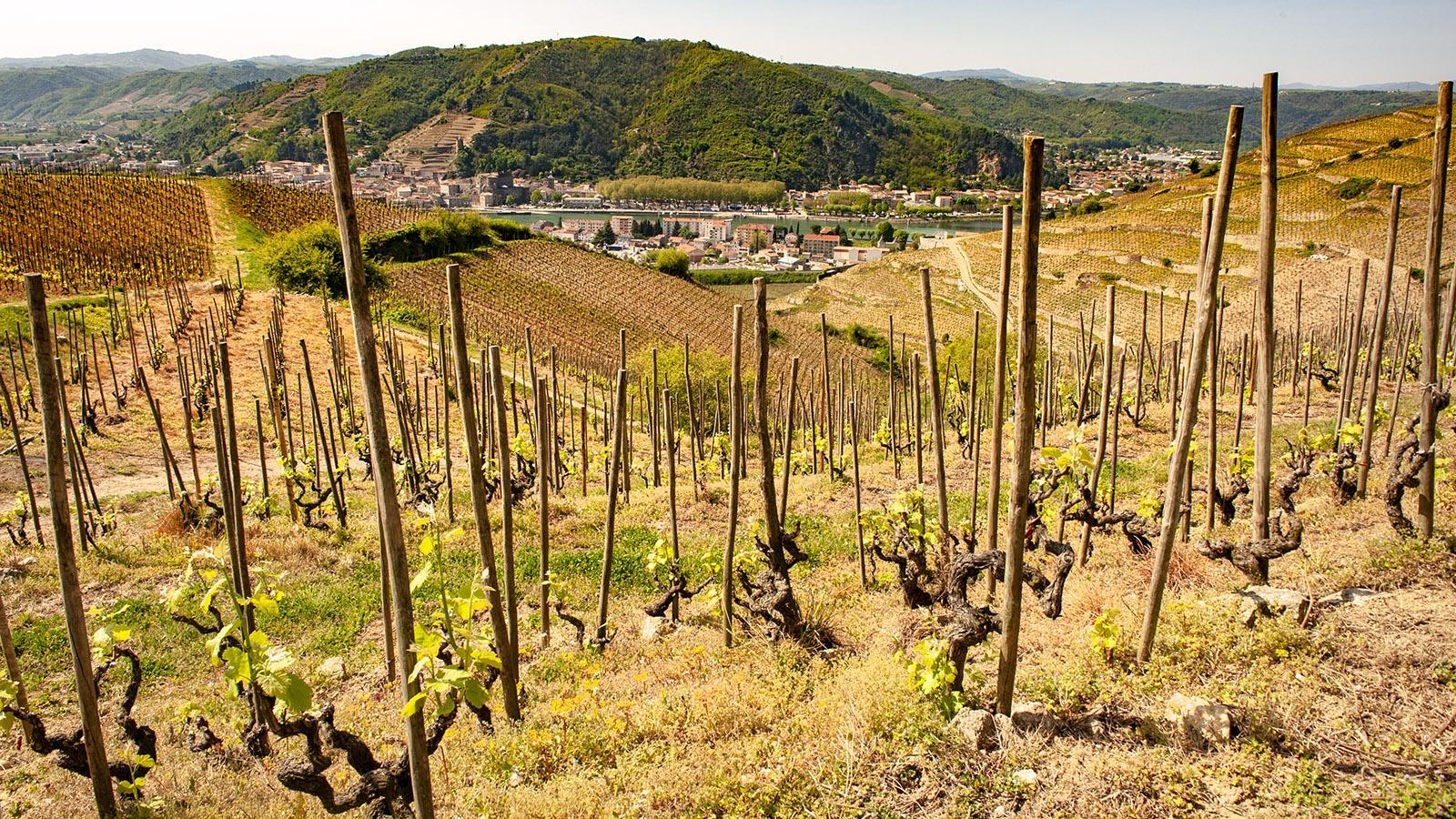 Blick von den Weinbergen auf Tain-l'Hermitage. Foto: Hilke Maunder