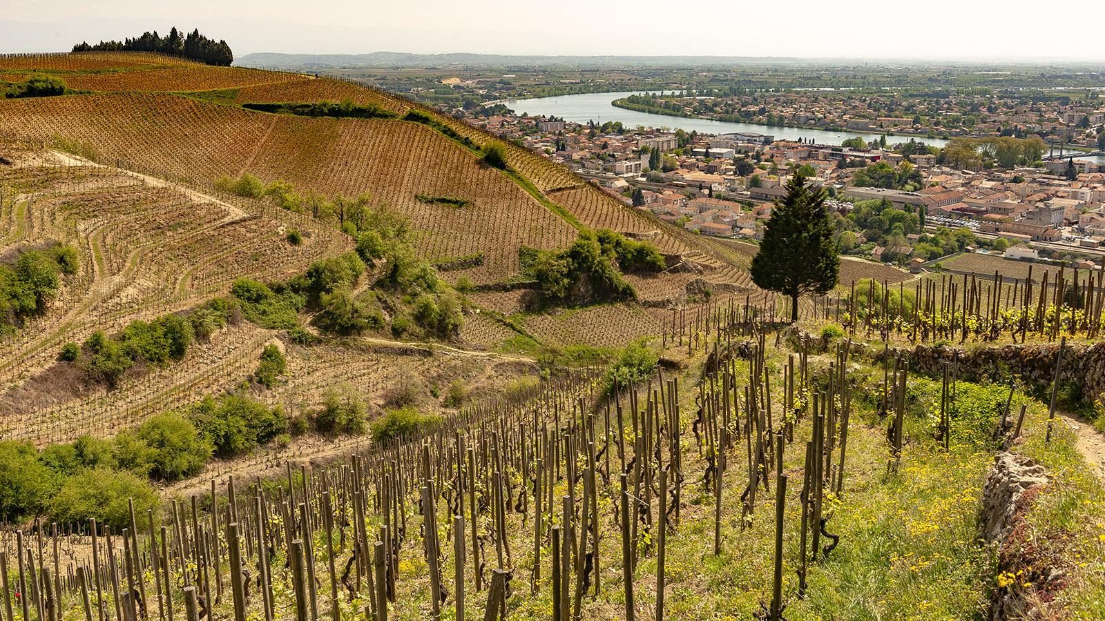 Blick vom Hermitage-Hügel über die Rebgärten auf die Rhône. Foto: Hilke Maunder
