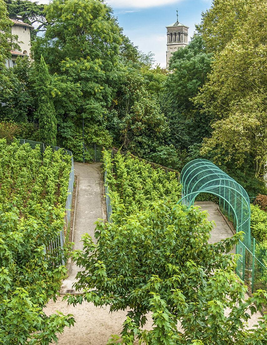 Der Stadtweingarten der Cave de Tain in Valence. Foto: Hilke Maunder