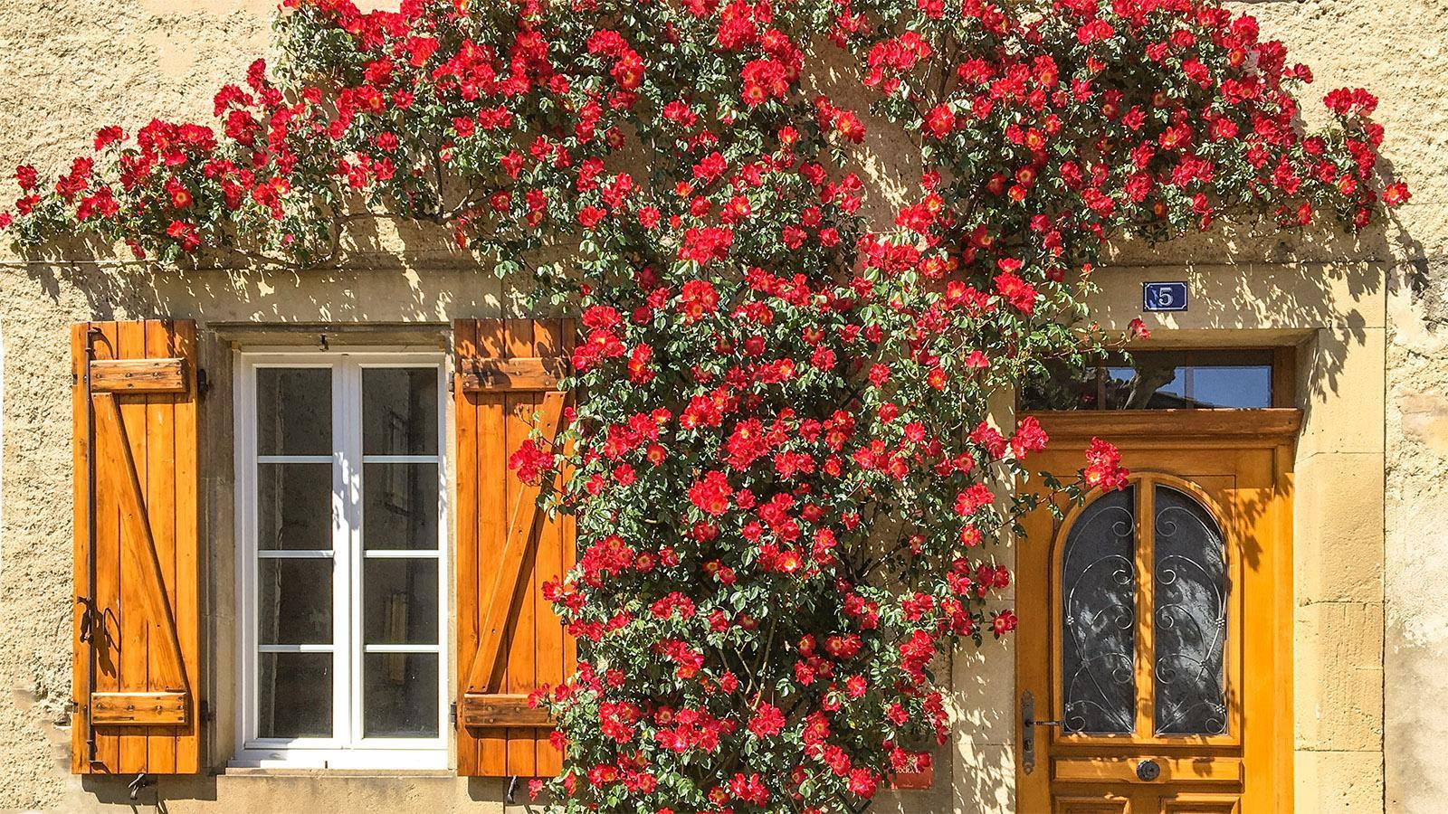 Ariège: Rosendorf Camon. Foto: Hilke Maunder