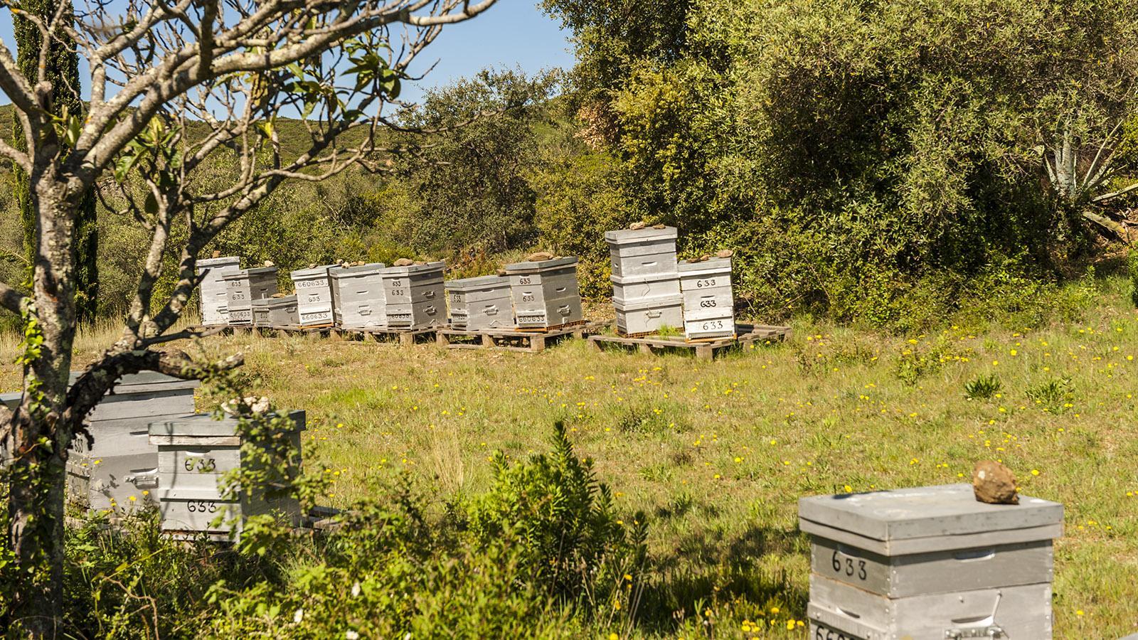 Die Bienenkörbe der Moulin de Canterrane. Foto: Hilke Maunder