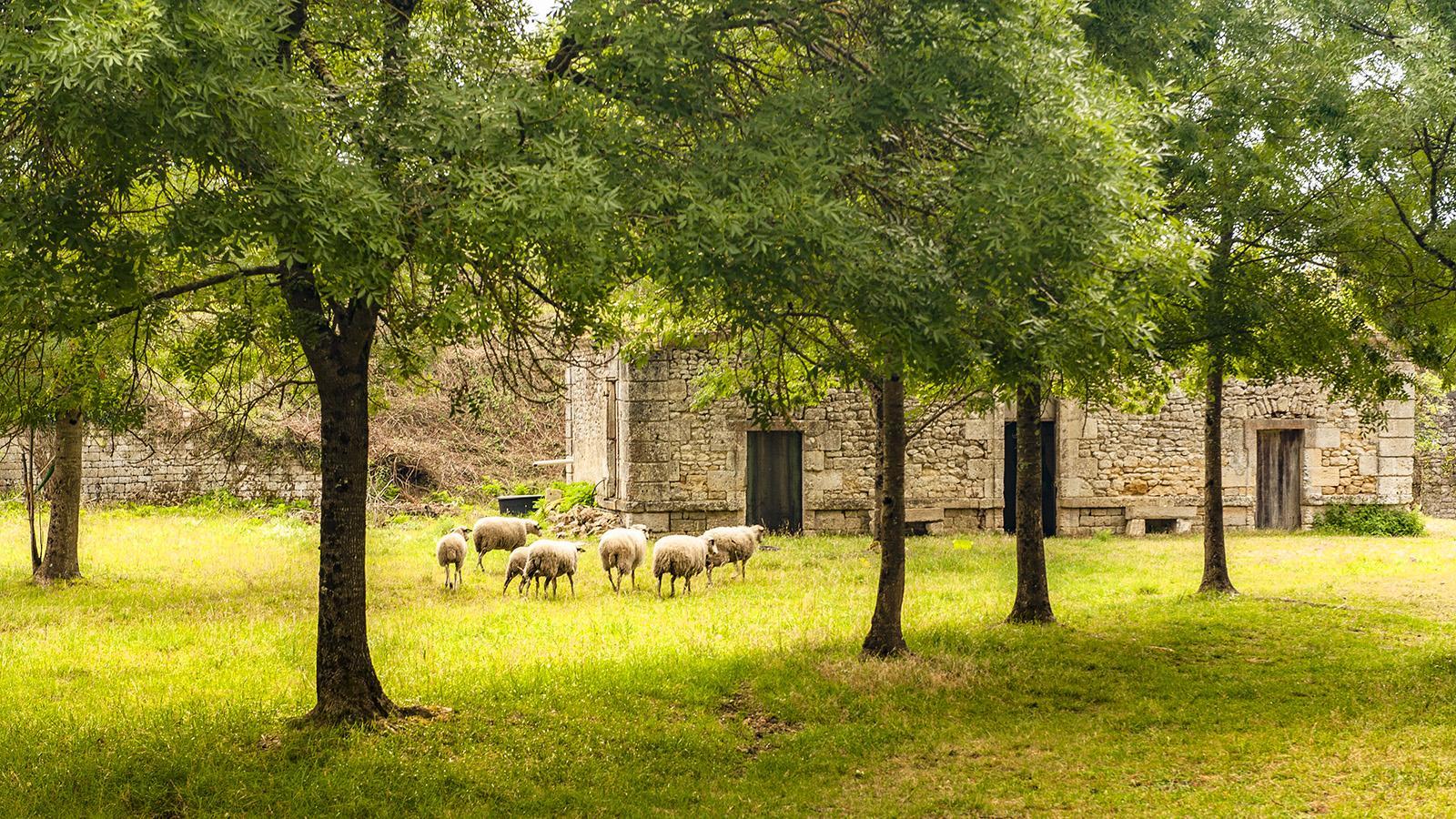 Zitadelle von Blaye. Foto: Hilke Maunder