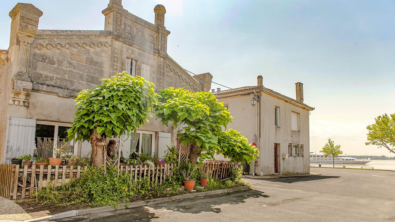 Bourg-sur-Gironde: Foto. Hilke Maunder