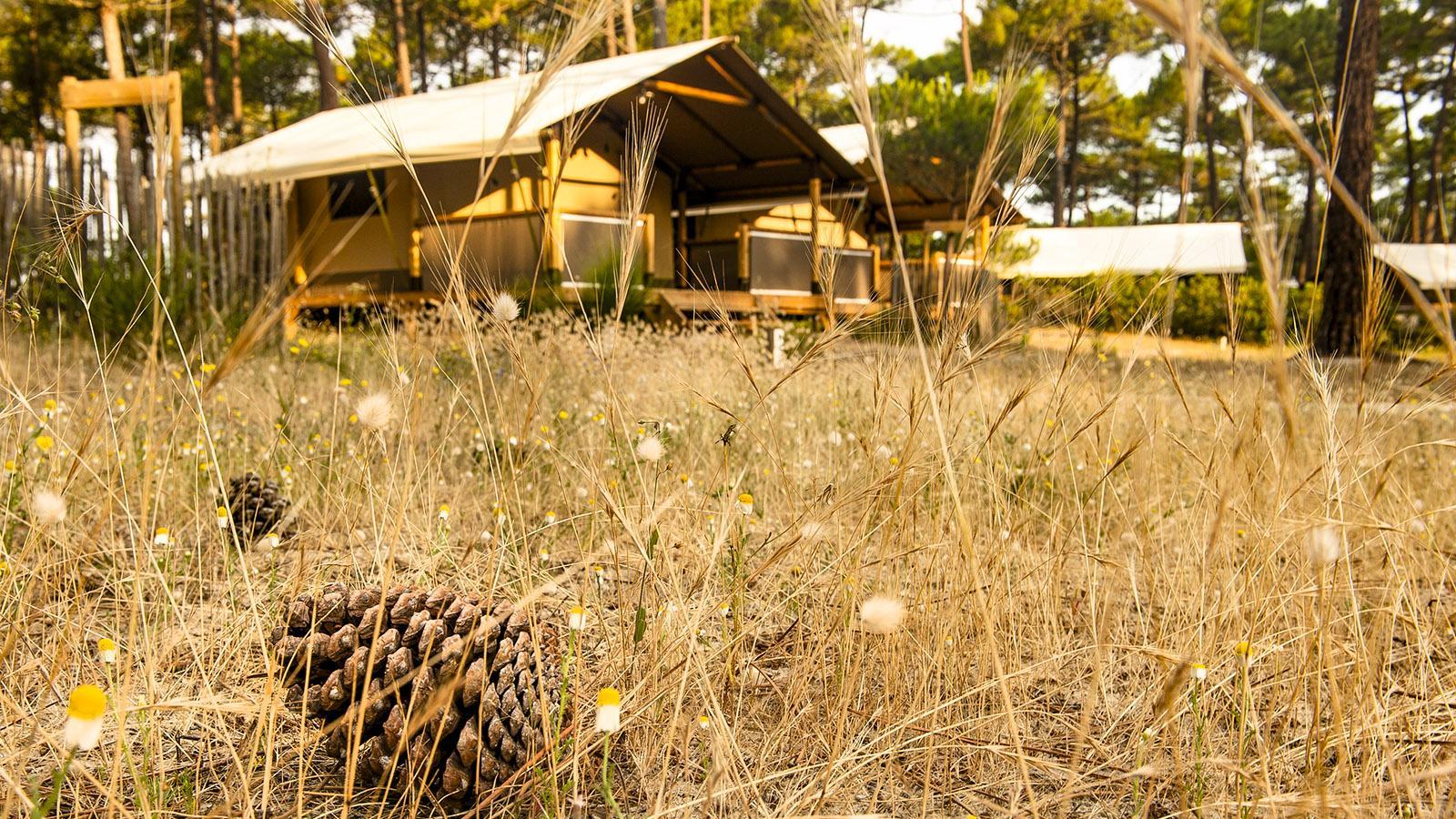 Carcans-Plage. Camping de l'Océan. Foto: Hilke Maunder