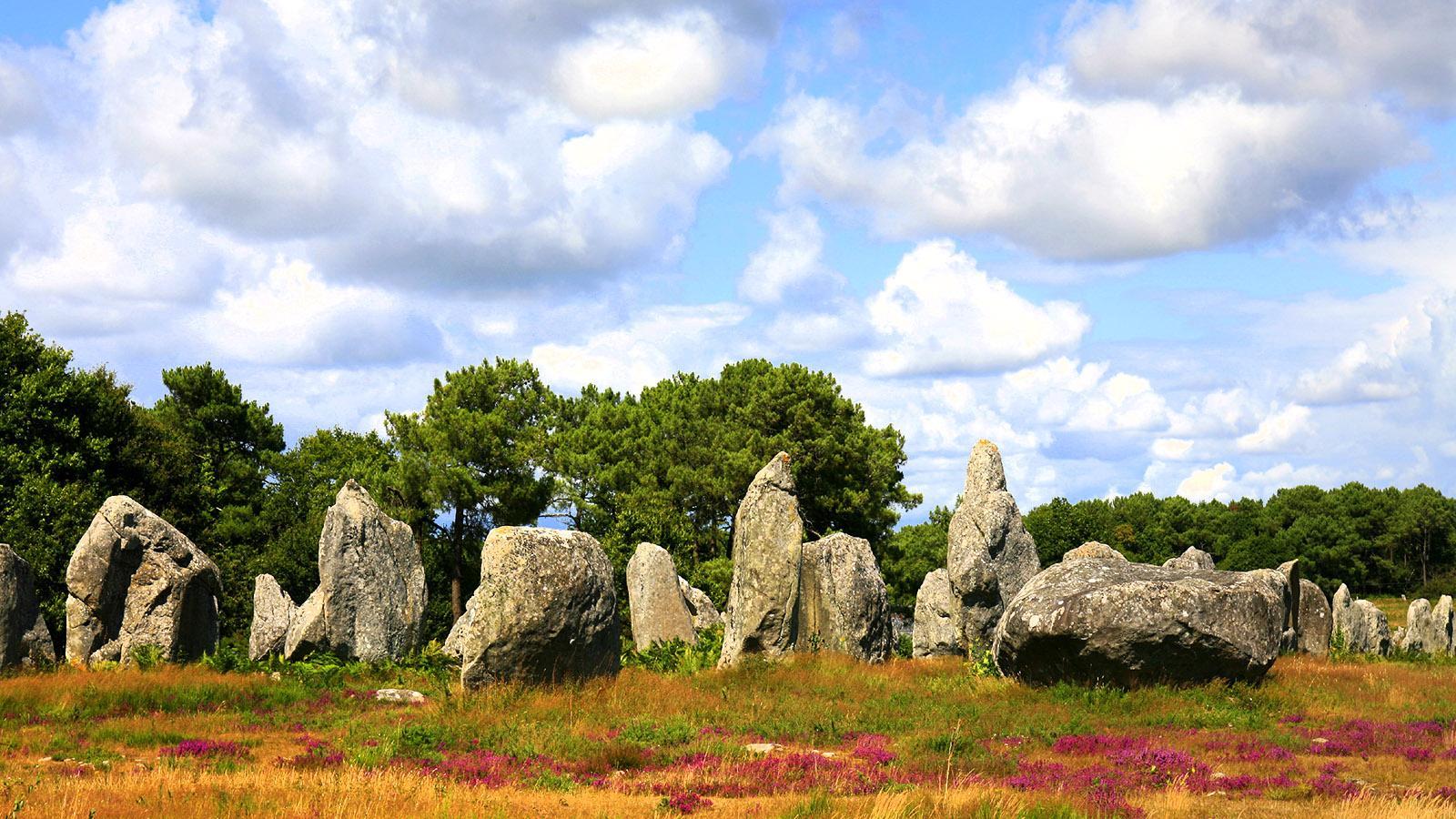 Menhire in Carnac. Foto: Michel Angot / MDLF