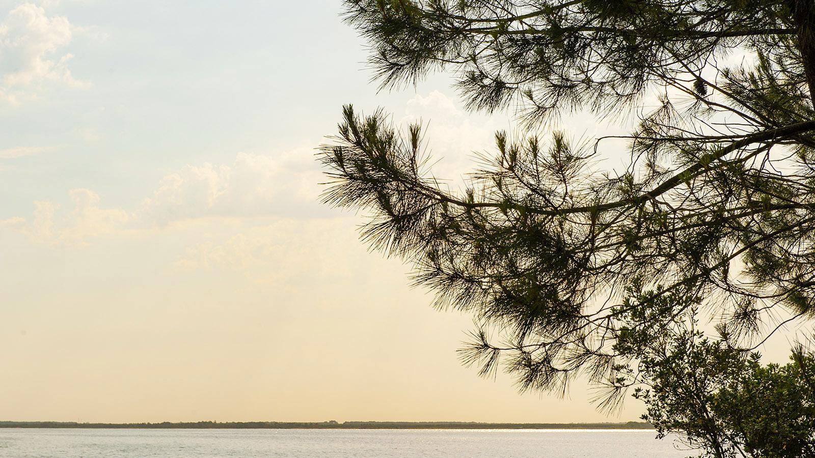 Der Lac de Hourtin-Carcans. Foto: Hilke Maunder