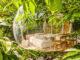 Vauclin: Domaine des bulles. Foto: Hilke Maunder