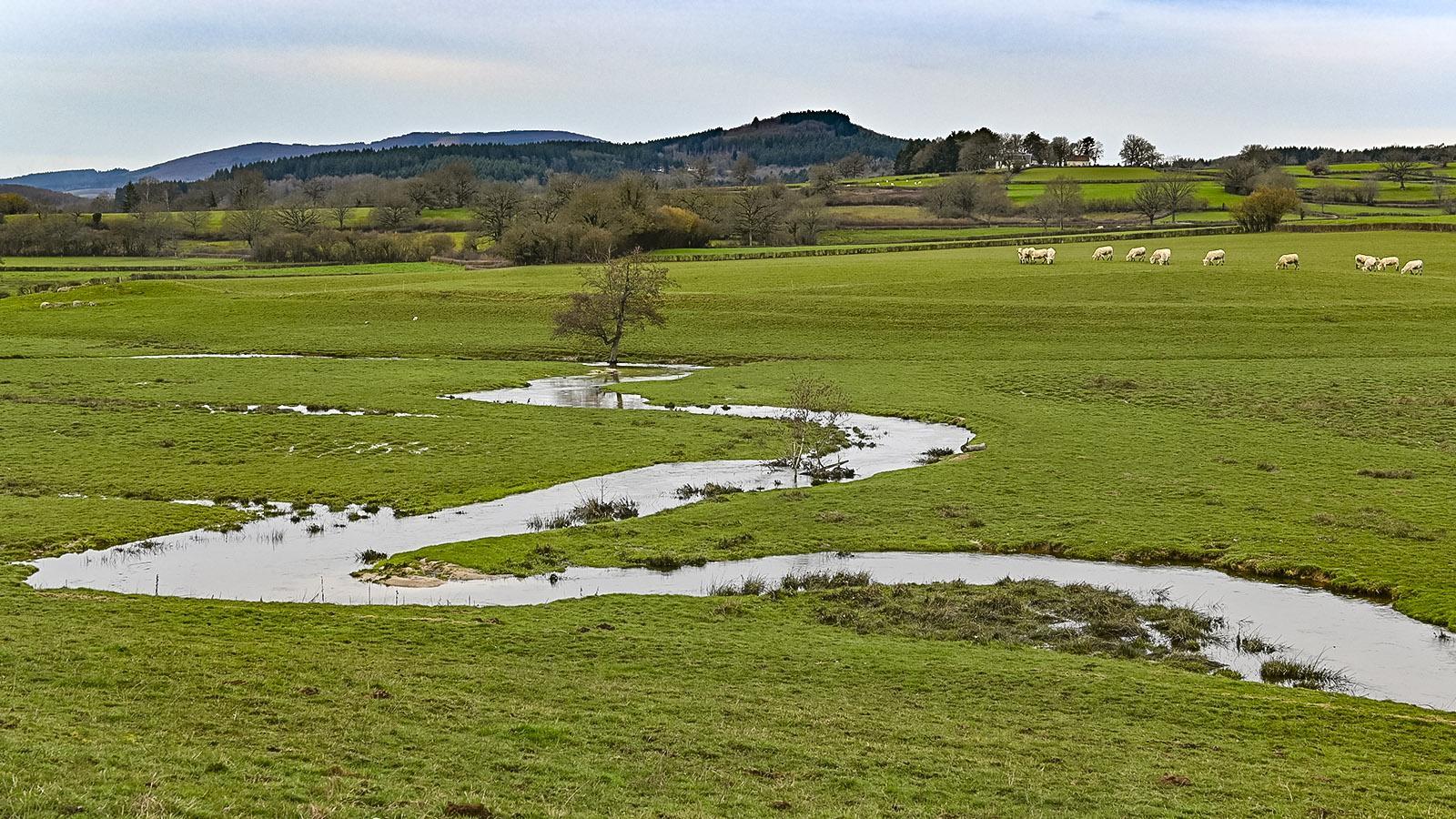 Auf dem Weg von Autun zu den Wäldern des Morvan kommt ihr auch an solchen Weiden vorbei. Foto: Hilke Maunder
