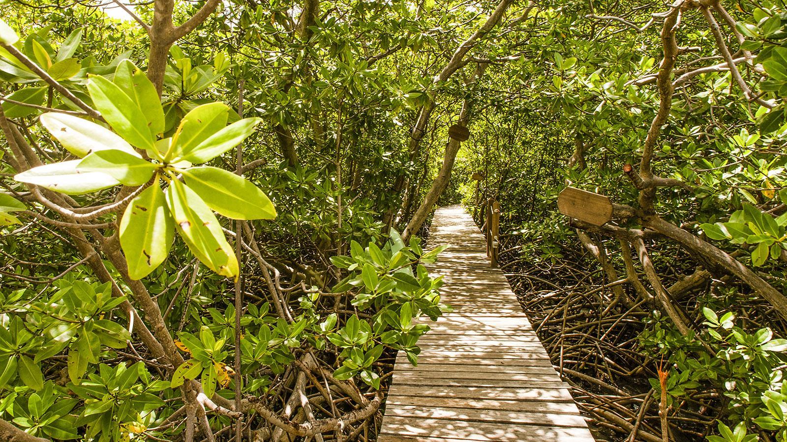 Durch die Mangroven geht es hinauf zur Kochvilla von Marie Claire Dubois. Foto: Hilke Maunder