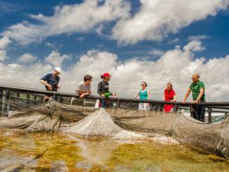 Martinique: In der Baie de Robert könnt ihr Aquakulturen besichtigen. Foto: Hilke Maunder