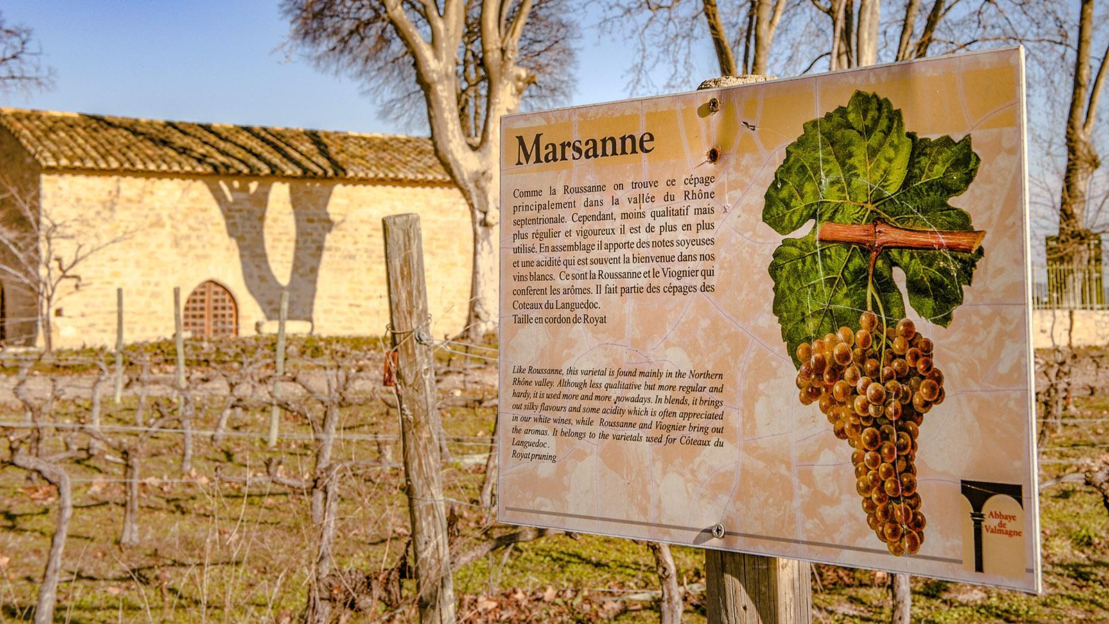 Valmagne. Foto: Hilke Maunder
