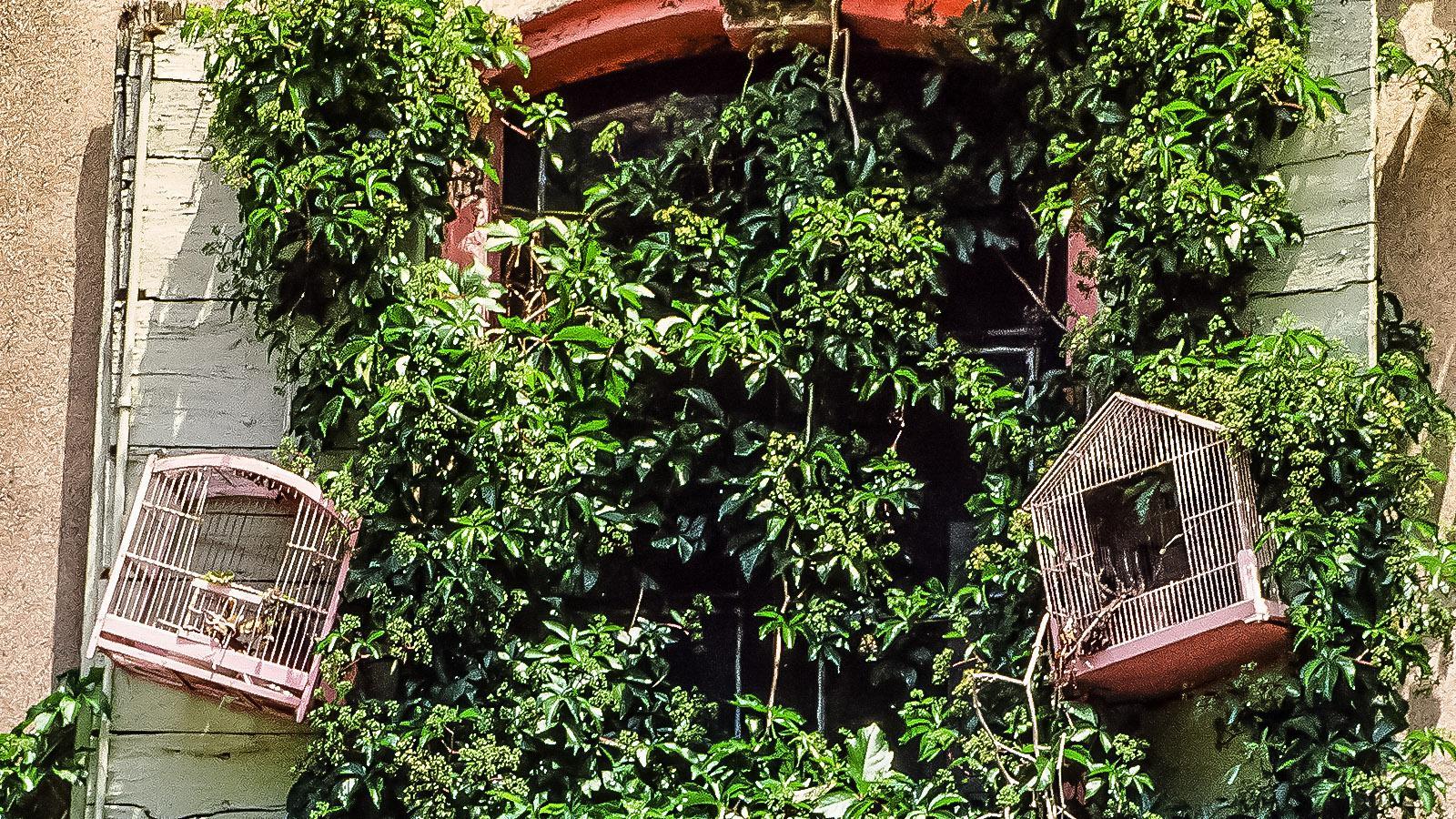Agde, Vogelkäfig. Foto: Hilke Maunder