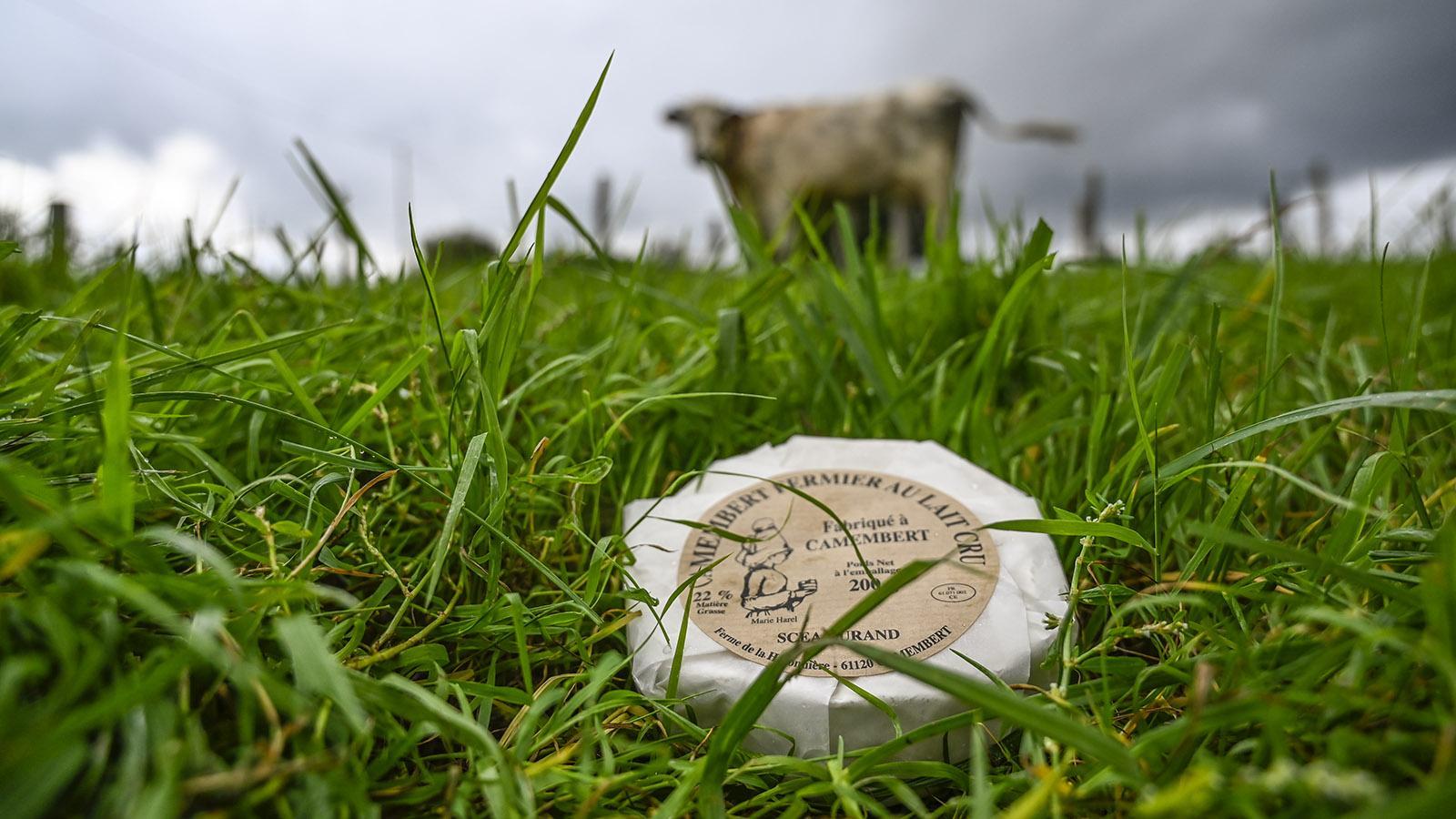 Nur die Fromagerie Durand fertigt den Camembert vor Ort noch ganz handwerklich aus Rohmilch. Foto: Hilke Maunder