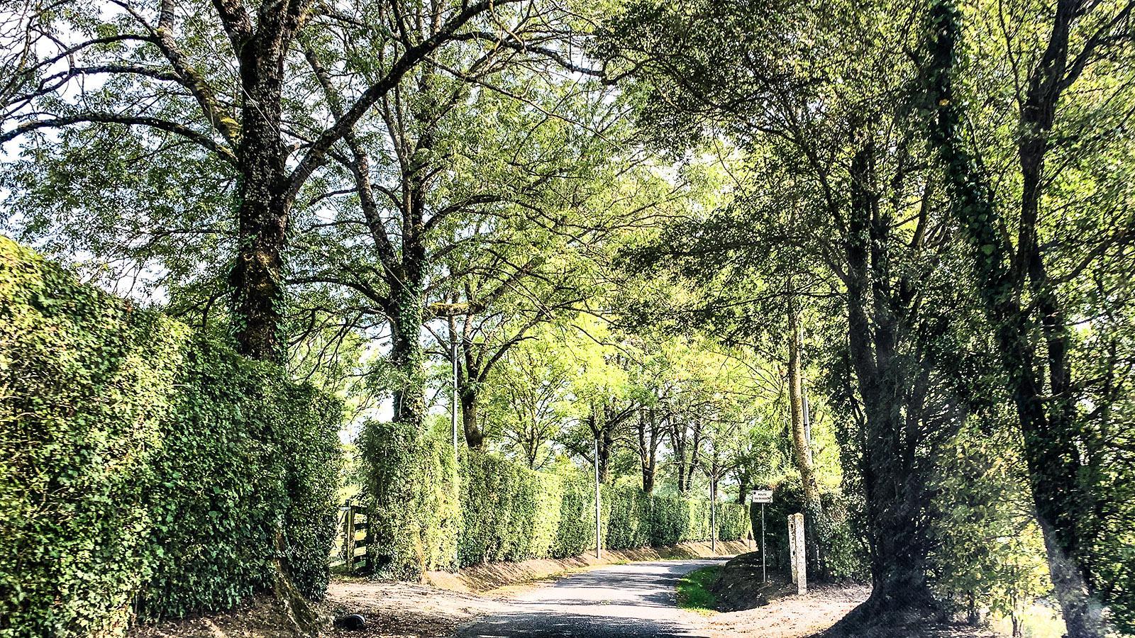 Mitunter mitten durch große Gestüte, auf denen edle Rösser gezüchtet werden, führen im Pays d'Auge die Straßen.