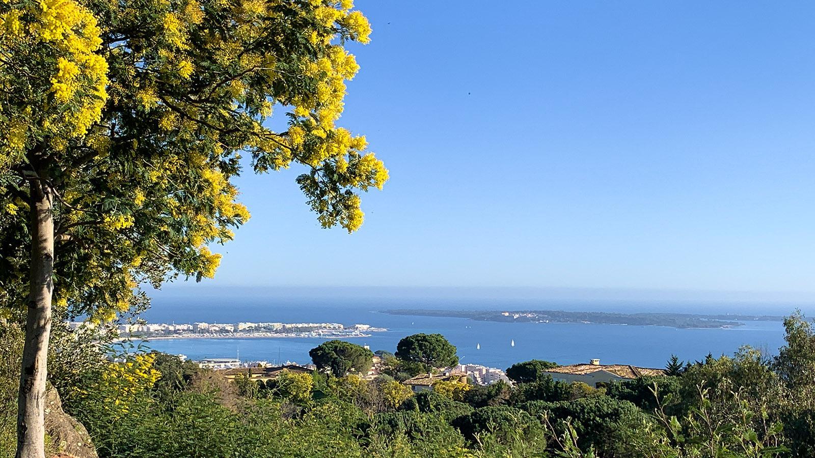 Traumblicke auf Cannes eröffnet sich vom Naturpark Croix des Gardes. Foto: Hilke Maunder