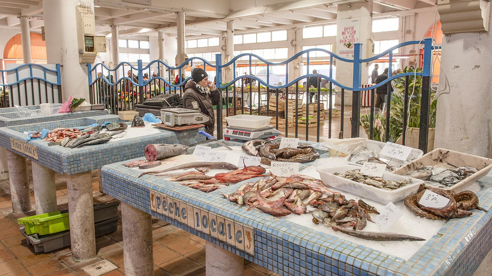 Cannes: Der Fischmarkt in der Markthalle von Forville. Foto: Hilke Maunder