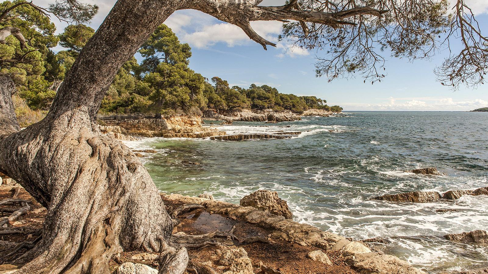 Die Südküste der Île Sainte-Marguerite. Foto: Hilke Maunder