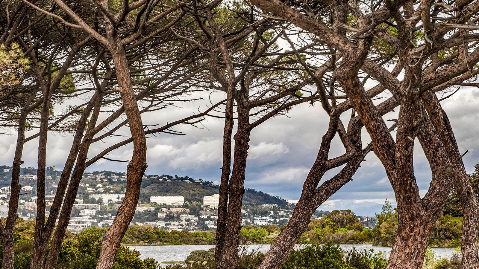 Ile Sainte-Marguerite. Foto: Hilke Maunder
