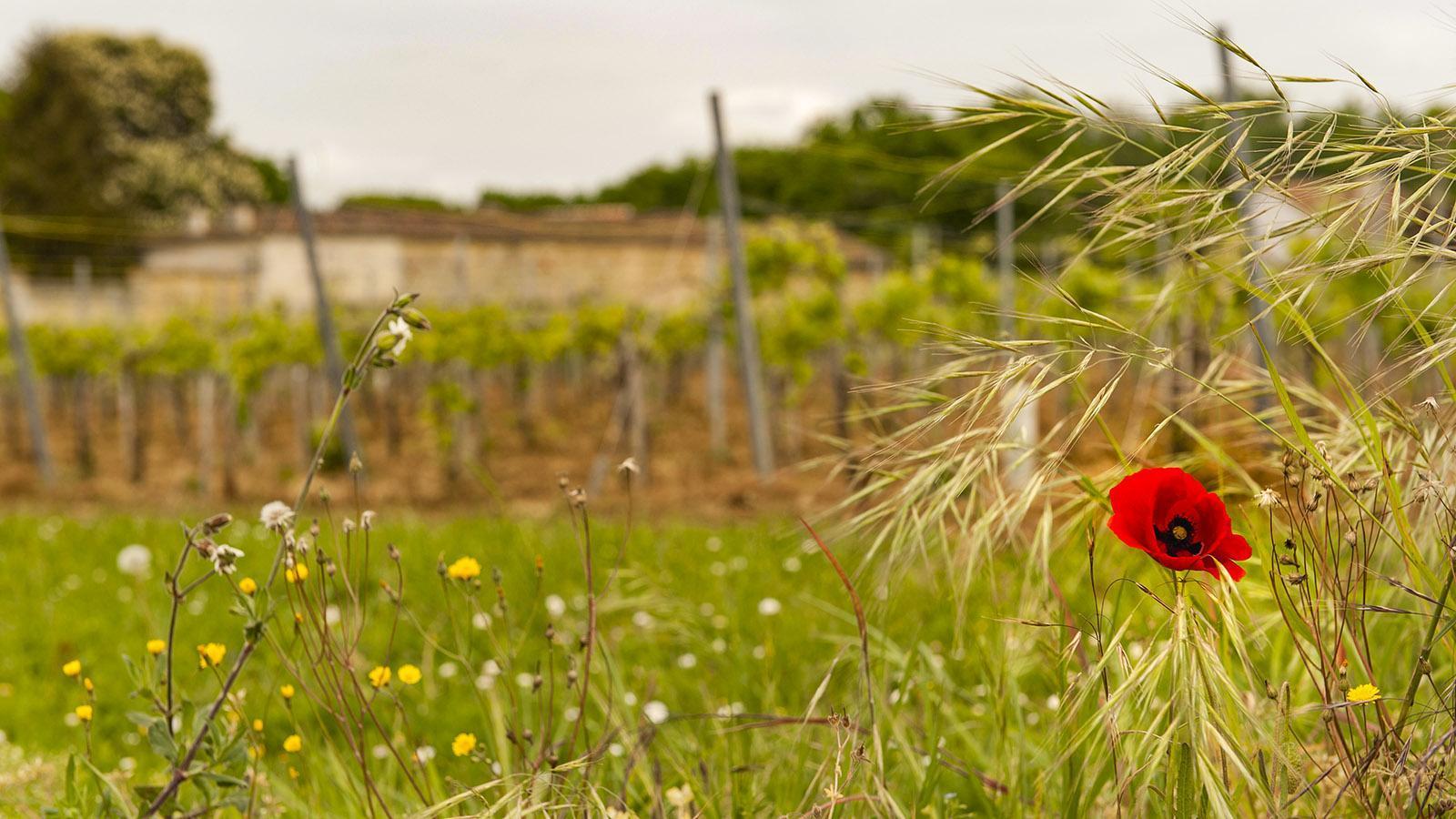 Bourg-Charente. Foto: Hilke Maunder