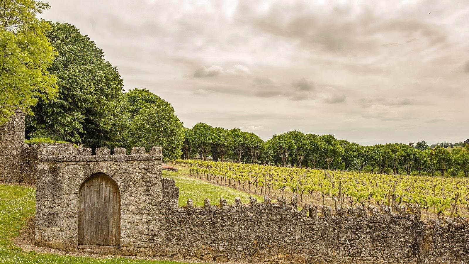 Bourg-Charente: Weinberg von Grand-Marnier. Foto: Hilke Maunder