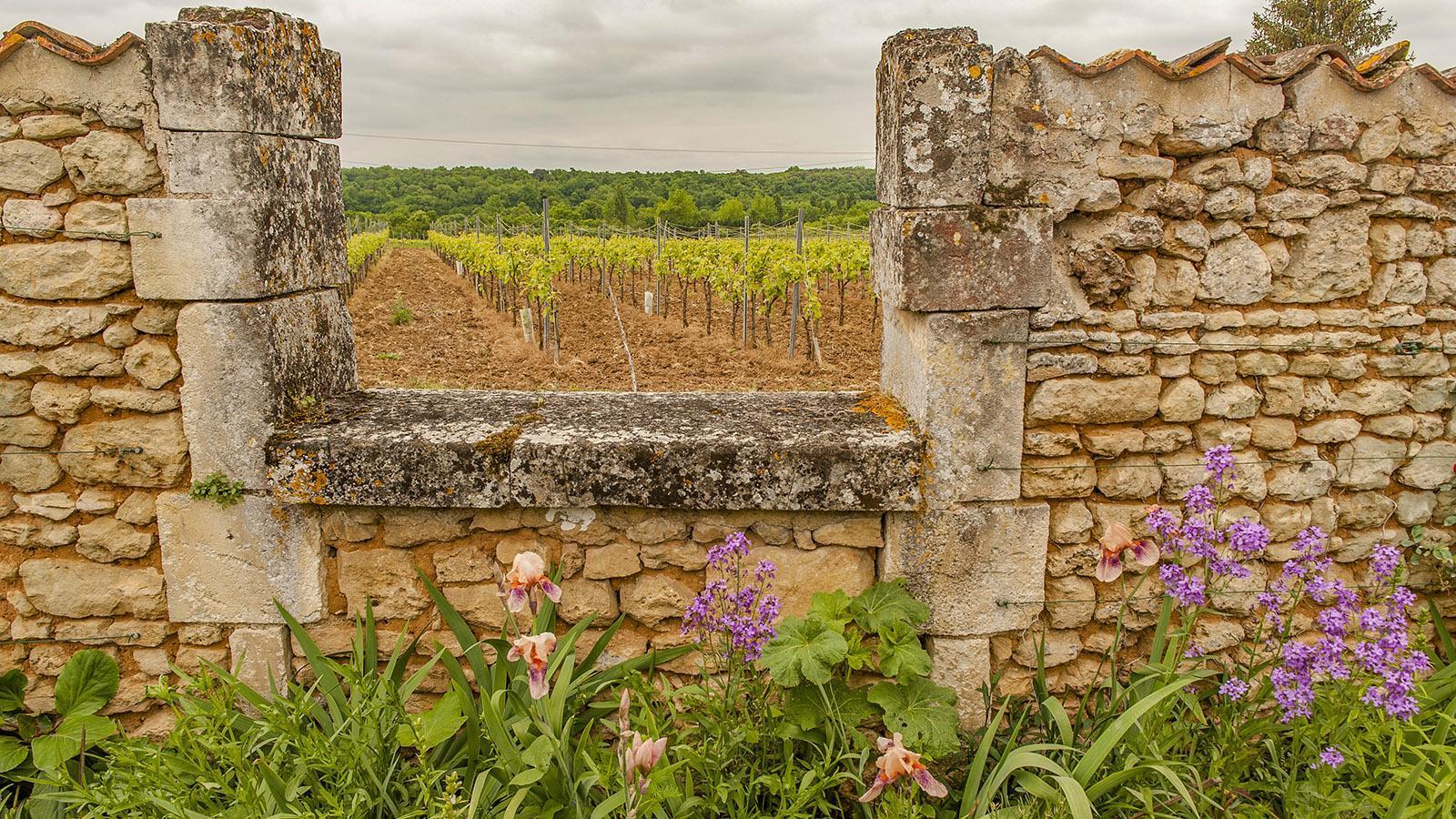 Bourg-Charente: Mauerblick auf die Crus-Lagen. Foto: Hilke Maunder