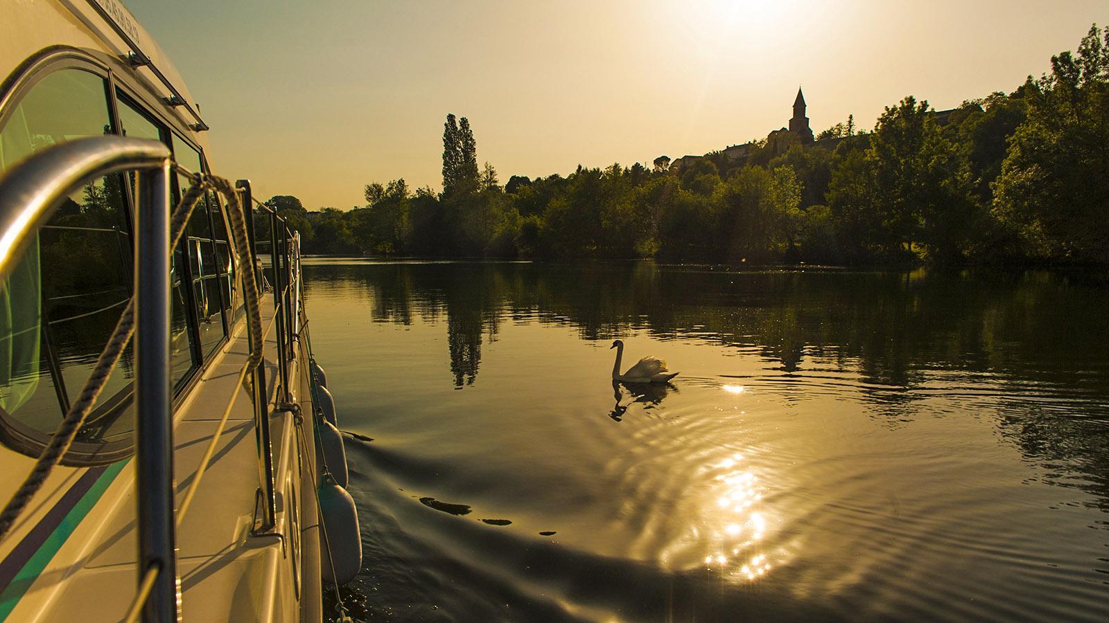 Zum Sonnenuntergang zog ein Schwan an unserem Boot vorbei. Foto: Hilke Maunder