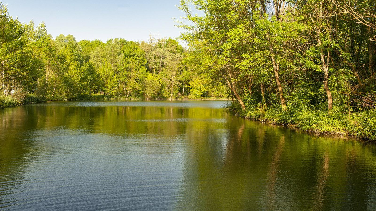 Natur pur... hier und da ein Zwitschern, ein Huschen, ein Plätschern... Stille. Foto: Hilke Maunder