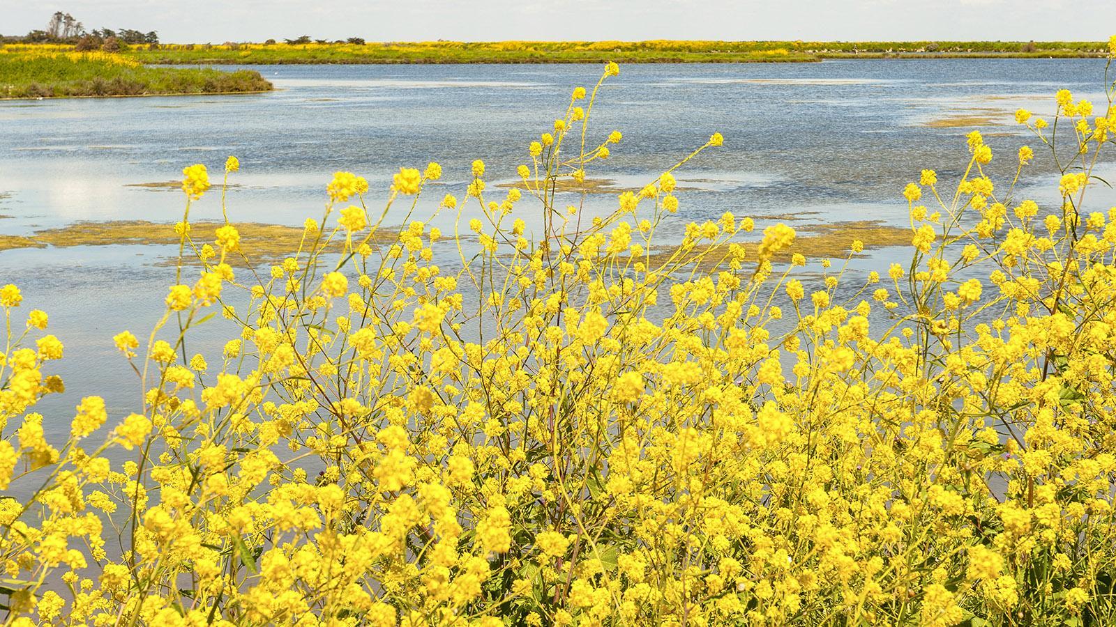 Île de Ré: Im Norden der Insel erstreckt sich das amphibische Réserve Naturelle Nationale de Lilleau. Foto: Hilke Maunder