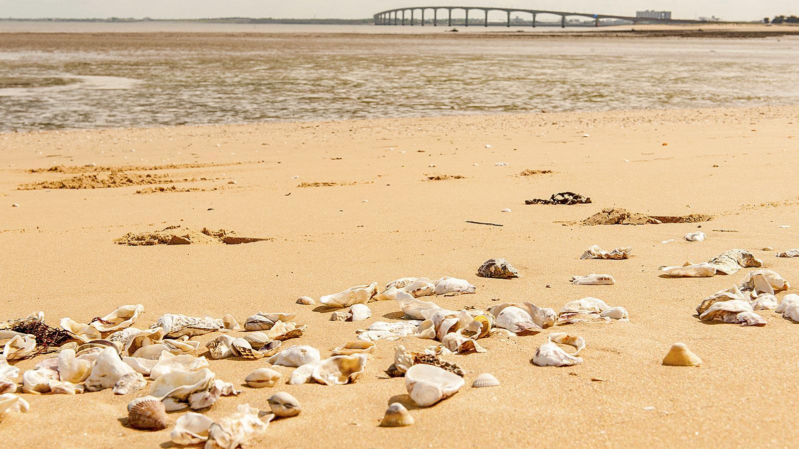Île de Ré: La Plage. Foto: Hilke Maunder