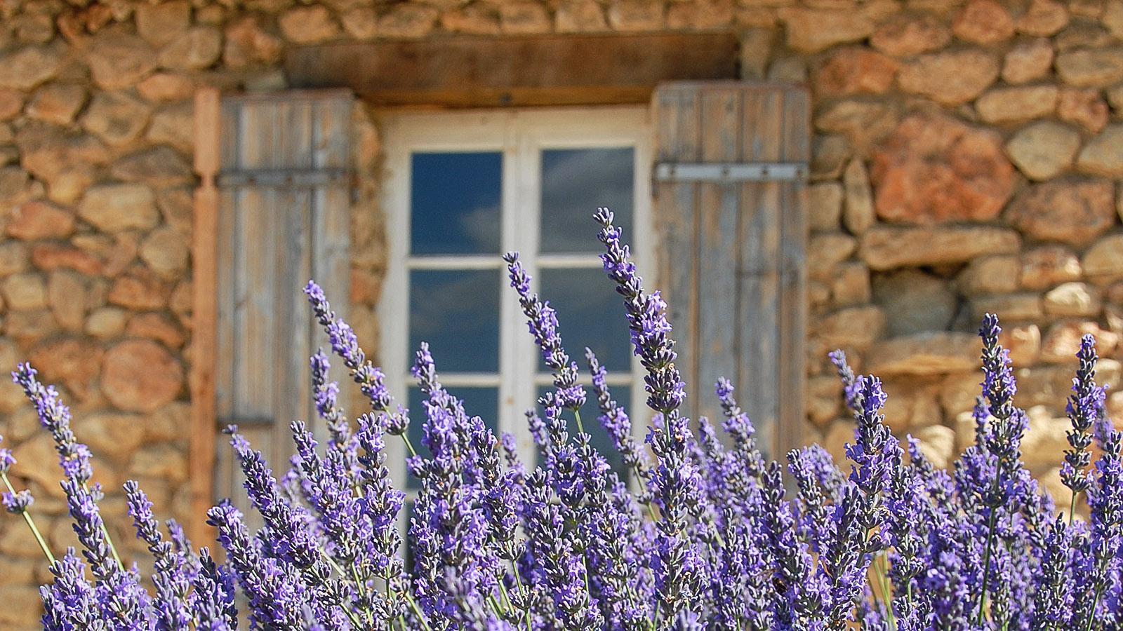 Provence-Flair: Vor einem Natursteinhaus blüht der Lavendel. Foto: Hilke Maunder