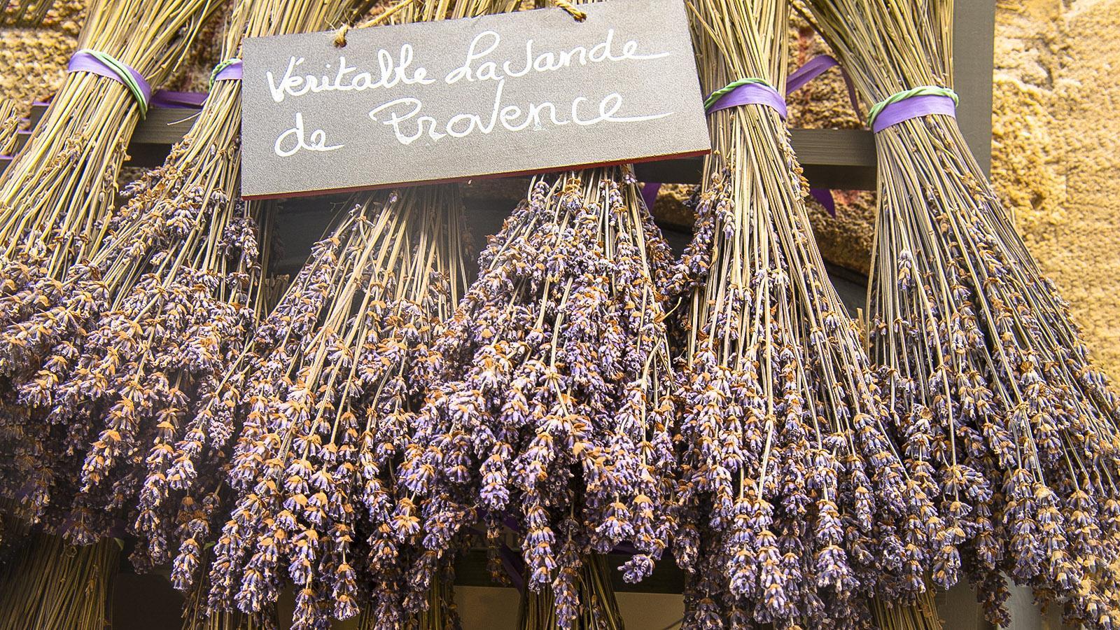 Lavendel bei der Lavanderie Agnels. Foto: Hilke Maunder