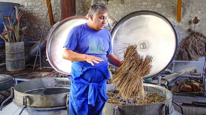 Lavendel: Philippe Soguel von der Distellerie Bleue Provence erklärt die Lavendelölextraktion. Foto: Hilke Maunder