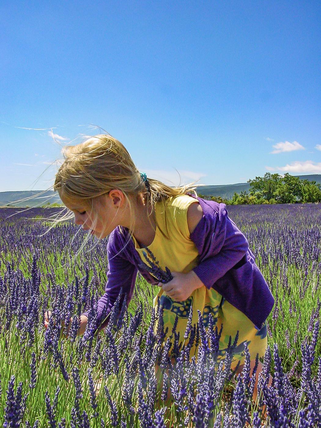 Lara erntet Lavendel. Foto: Hilke Maunder