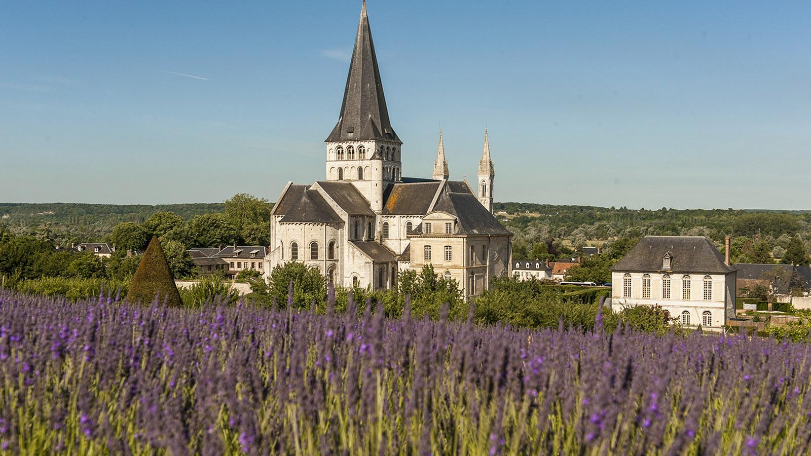 Im Juli blüht der Lavendel im Klostergarten von Saint-Martin-de-Boscherville... in der Normandie! Foto: Hilke Maunder