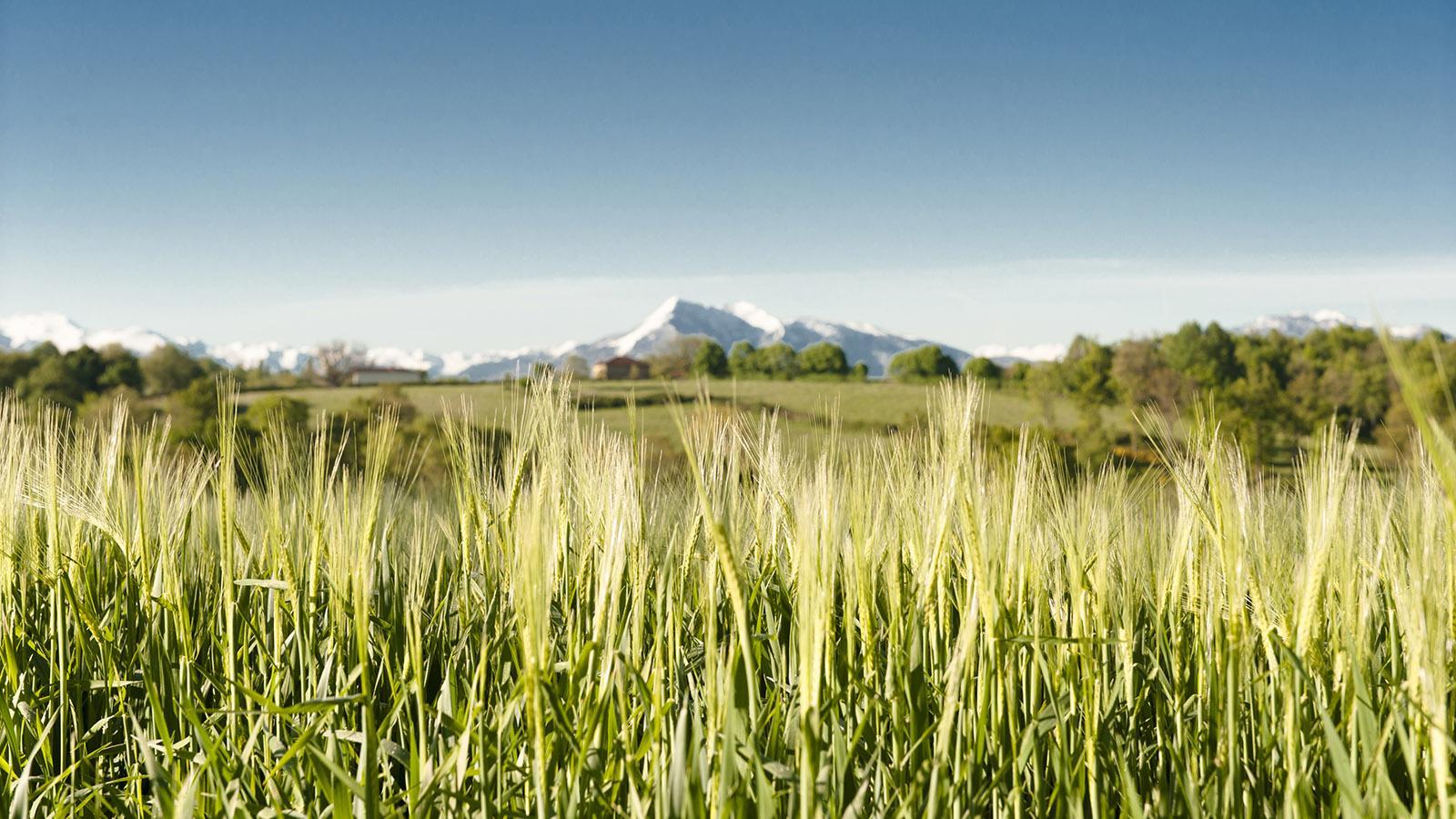 Die Pyrenäen bei Aurignac. Foto: Hilke Maunder