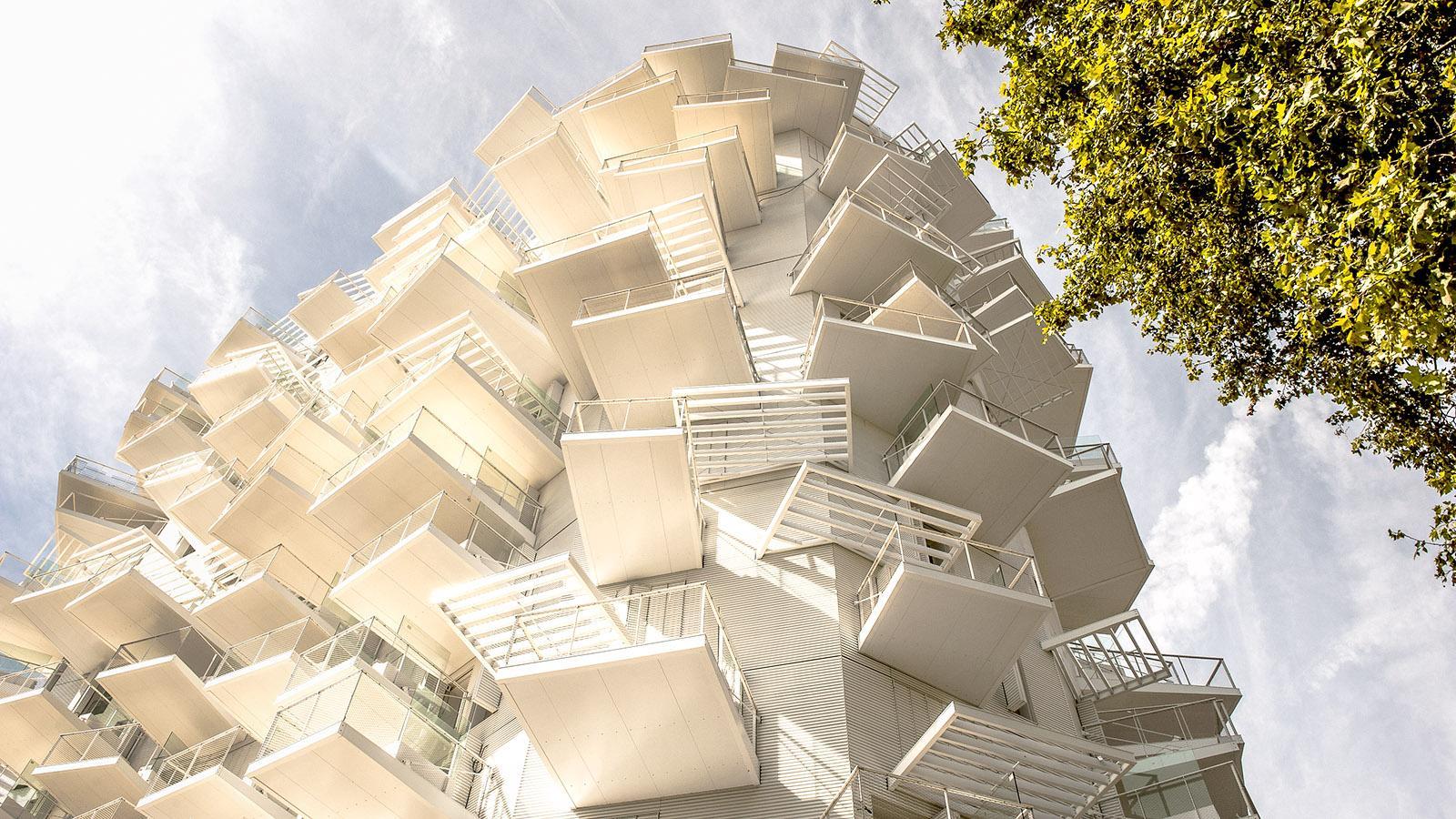 Montpellier: Detail des Arbre Blanc am Lez. Foto: Hilke Maunder
