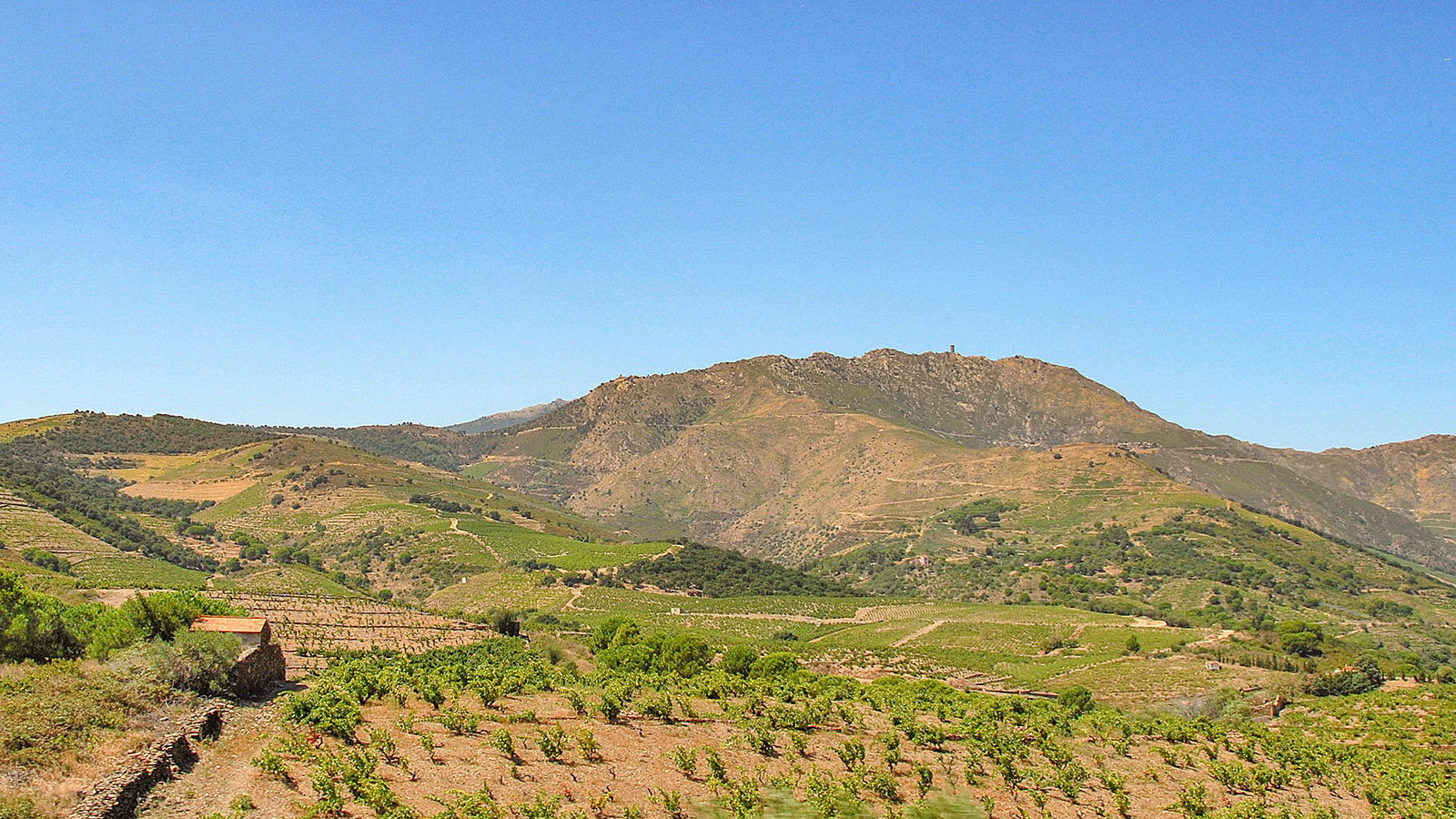 Die steilen Weinberge von Banyuls. Foto: Hilke Maunder