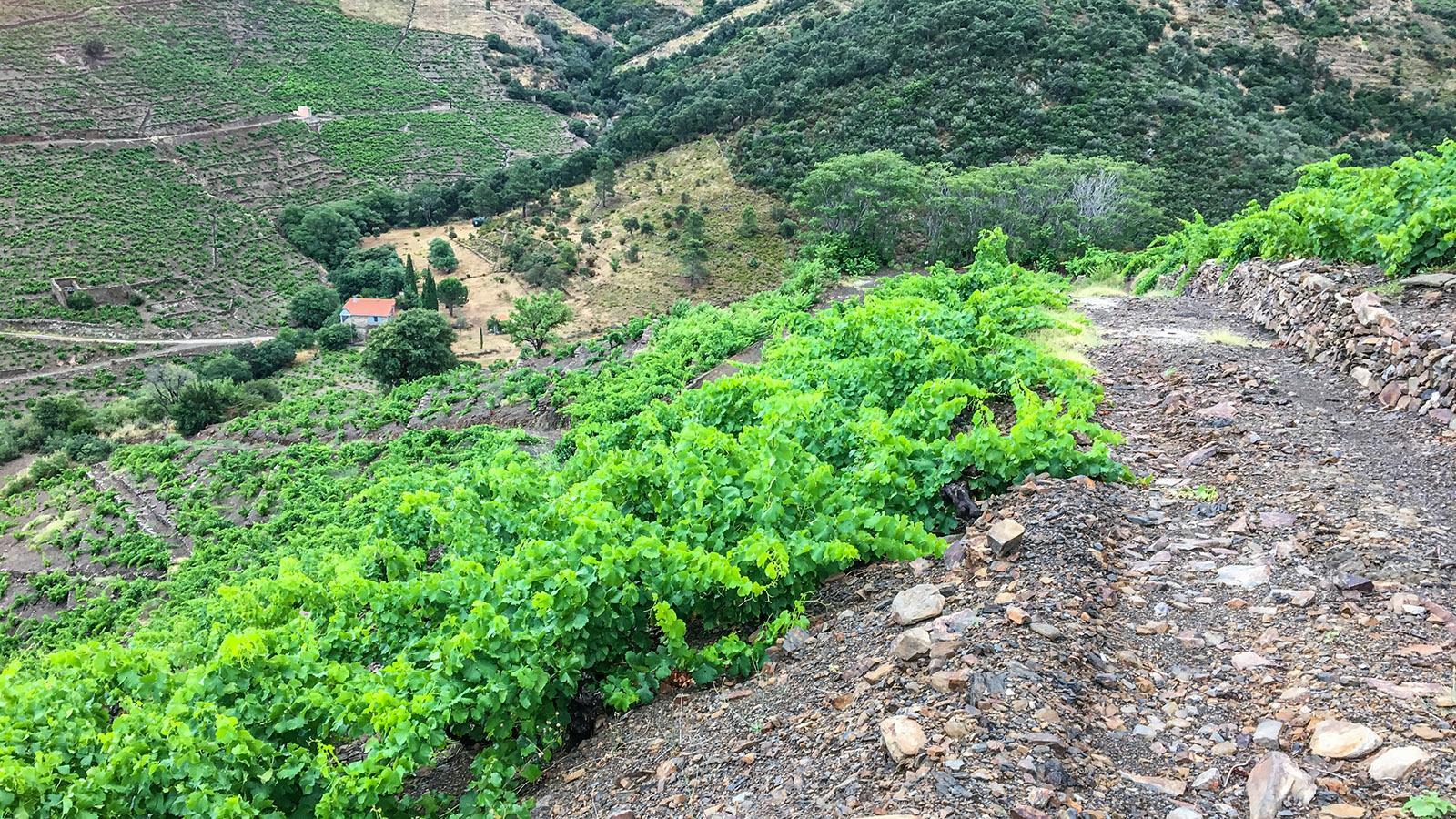 Schiefer und Basalt prägen Berge und Wege der Côte Vermeille. Foto: Hilke Maunder