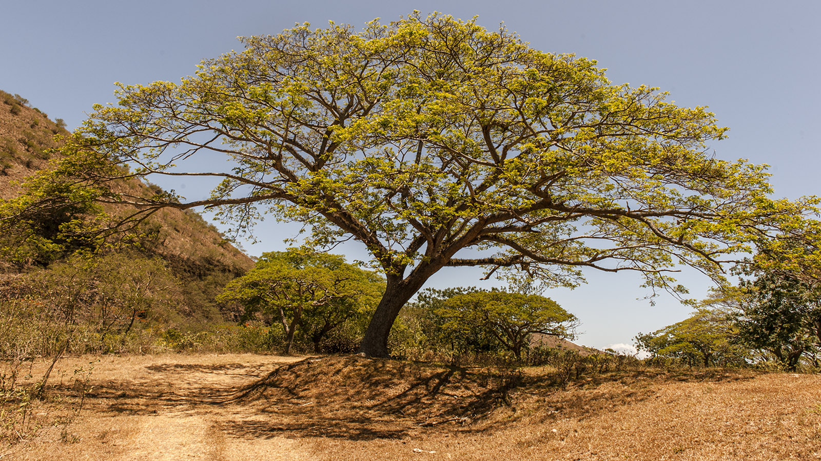 Wilde Westen: Auf den weiten Weiden bieten riesige Bois Noir (Blackwood)-Bäume Schatten. Foto: Hilke Maunder