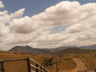 Wilder Westen: Die Westküste von Grande-Terre ist die Heimat der Broussards, der Viehzüchter, die hier Rinder züchten. Foto: Hilke Maunder
