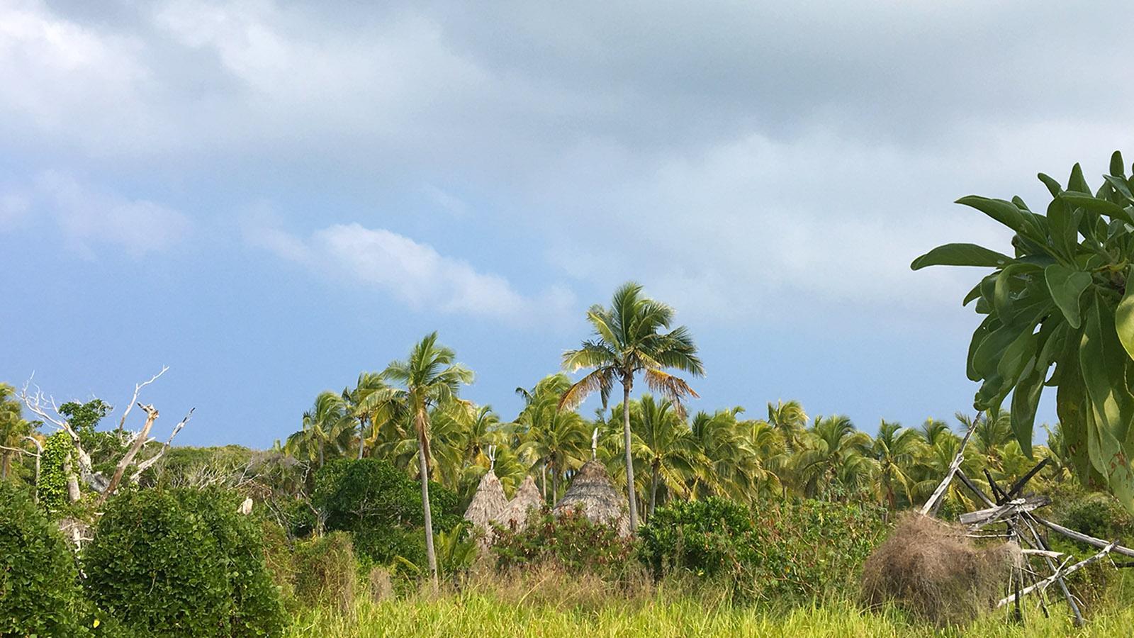 """Auch die traditionellen """"cases"""" der Kanaken umgeben auf Ouvéa Kokospalmen"""