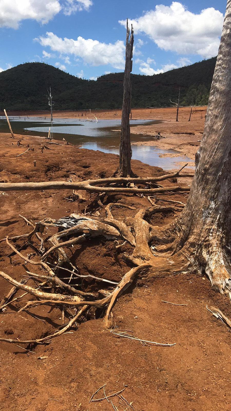 Der versunkene Wald des Parc Provincial de la Rivière Bleue - bei Trockenheit ragen einige tote Bäume auch am Ufer auf. Foto: Hilke Maunder