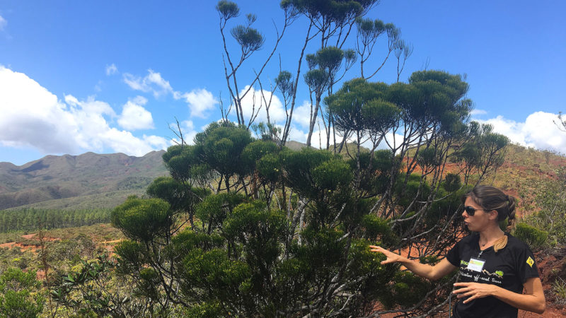Riviere Bleue: Axelle kennt die exotisch fremde Pflanzenwelt im Süden von Neukaledonien. Foto: Hilke Maunder