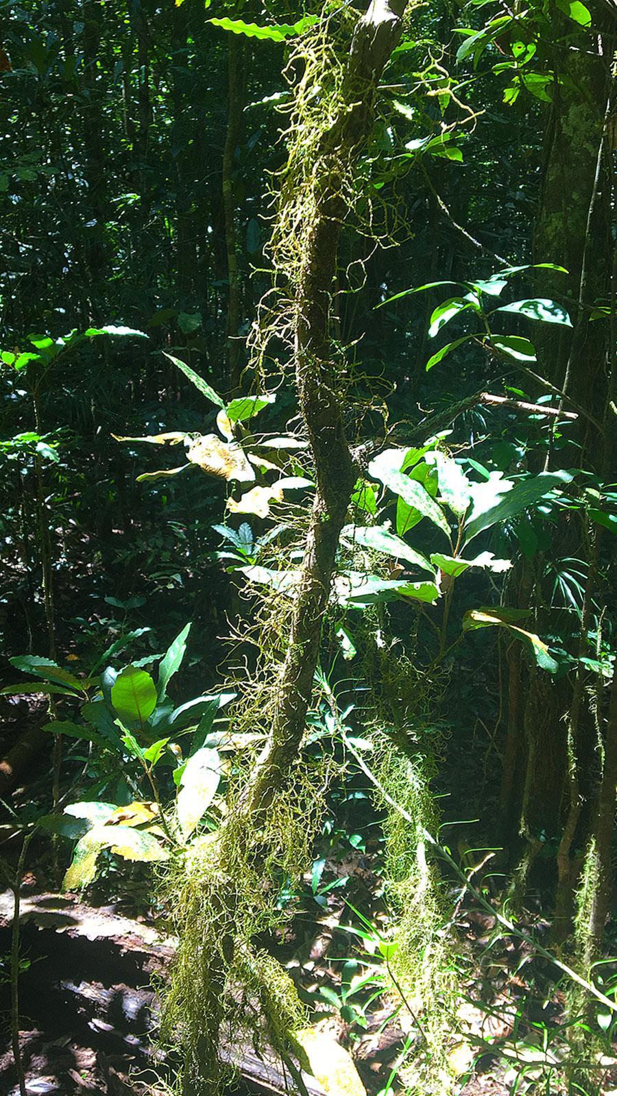 Im Regenwald von Rivière Bleue. Foto: Hilke Maunder