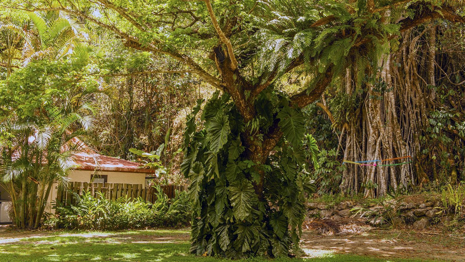 Wilder Westen: Das tropische Grün erobert rund um Sarraméa auch Haus und Hof. Foto: Hilke Maunder