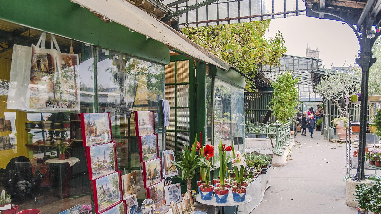 Märkte: Der Blumenmarkt der Île de la Cité. Foto: Hilke Maunder