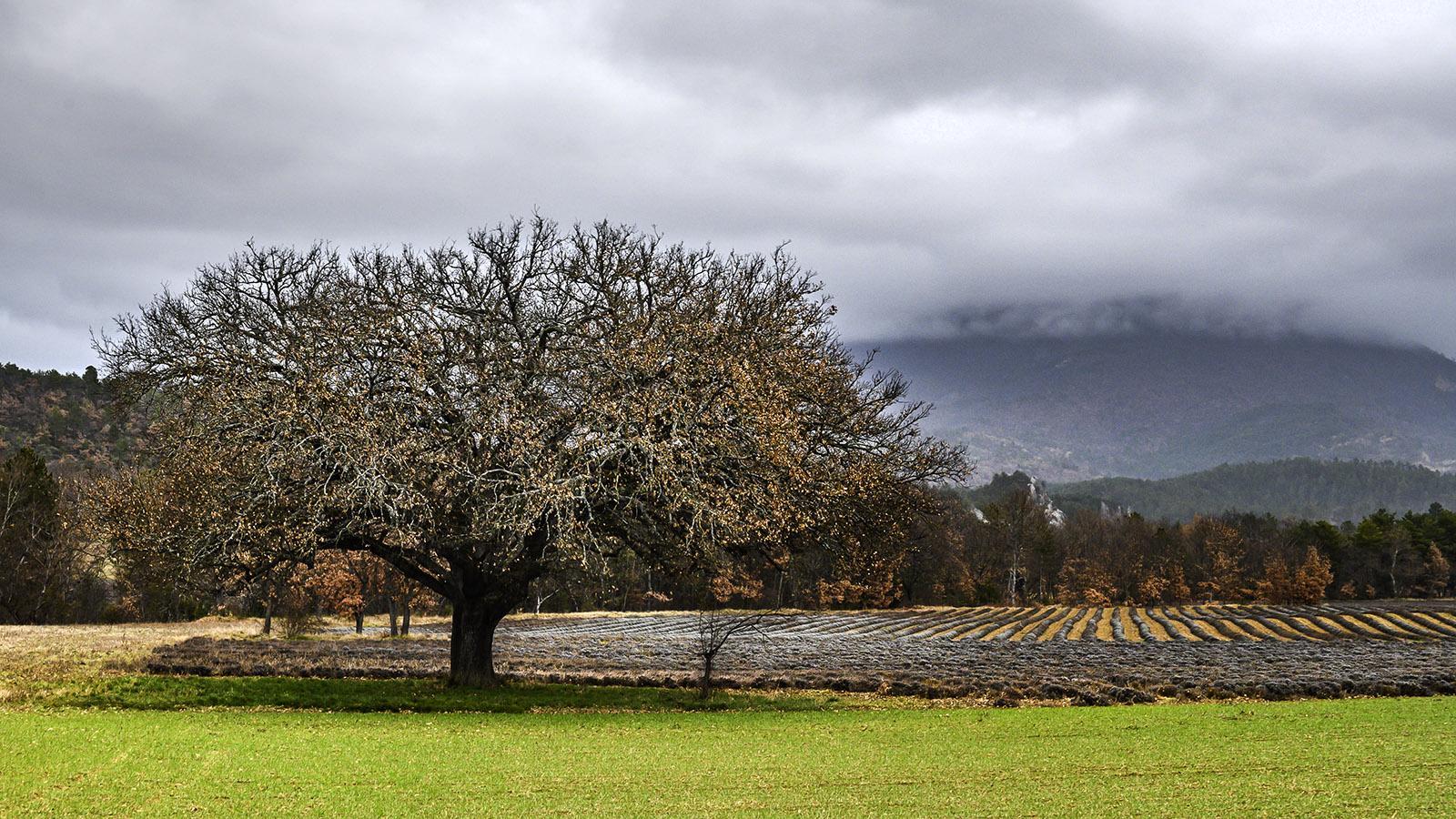 Im Norden der Haute-Provence. Foto: Hilke Maunder