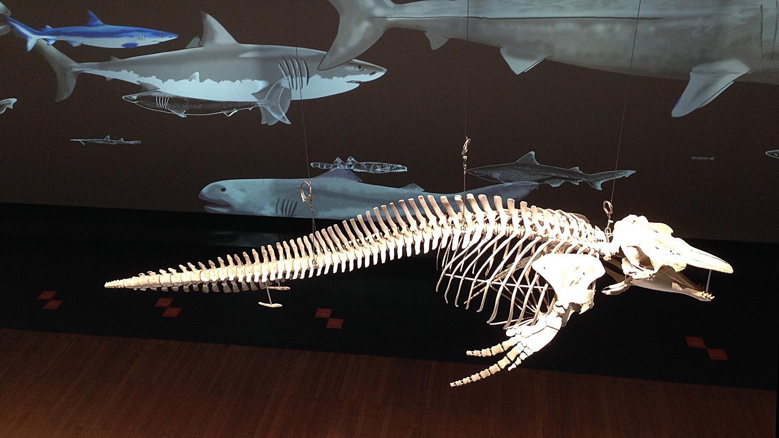 Nicht nur lebende Fischer, sondern auch Skelette und nautisches Gerät zeigt das Meeresmuseum von Monaco. Foto: Hilke Maunder