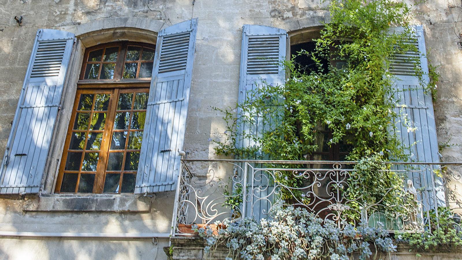 Begrünte Fassade in Avignon. Foto: Hilke Maunder